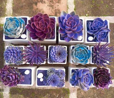 Cómo combinar colores azules - Flores