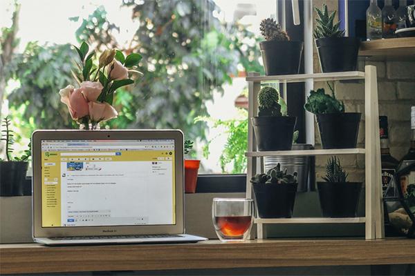 Plantas y cactus para la decoración otoñal de tu espacio personal