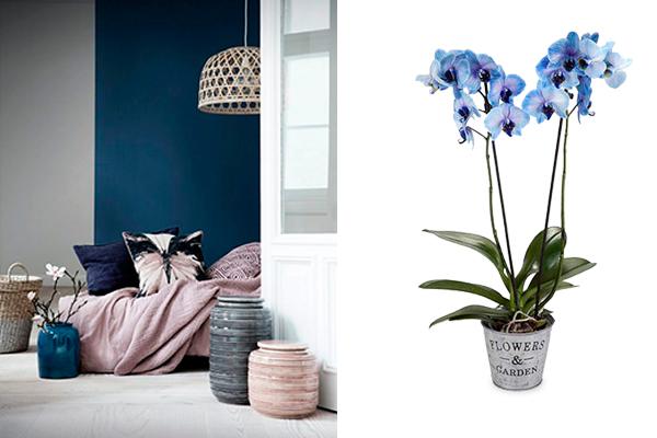 decorar con flores orquideas